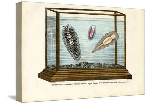 Flat Worms, 1863-79-Raimundo Petraroja-Stretched Canvas Print