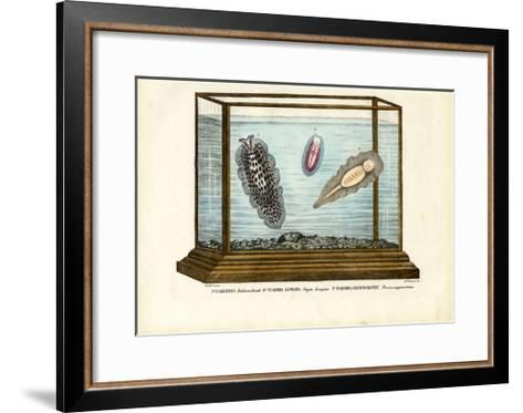 Flat Worms, 1863-79-Raimundo Petraroja-Framed Art Print