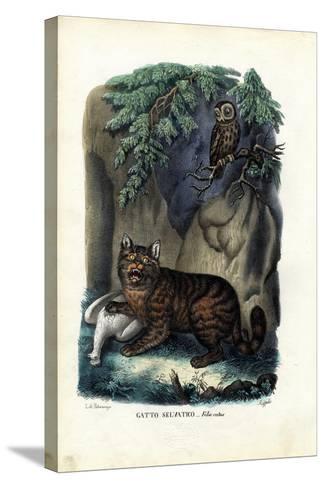 Wildcat, 1863-79-Raimundo Petraroja-Stretched Canvas Print