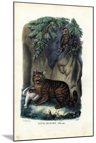Wildcat, 1863-79-Raimundo Petraroja-Mounted Giclee Print