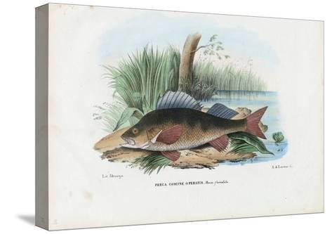 European Perch, 1863-79-Raimundo Petraroja-Stretched Canvas Print