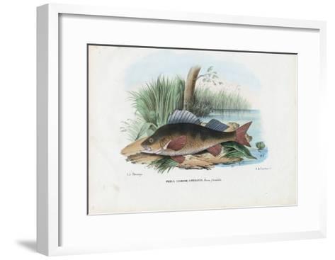 European Perch, 1863-79-Raimundo Petraroja-Framed Art Print