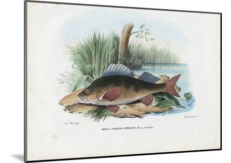 European Perch, 1863-79-Raimundo Petraroja-Mounted Giclee Print