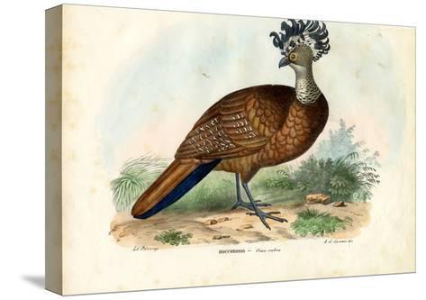 Great Curassow, 1863-79-Raimundo Petraroja-Stretched Canvas Print