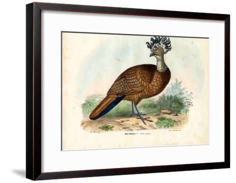 Great Curassow, 1863-79-Raimundo Petraroja-Framed Art Print