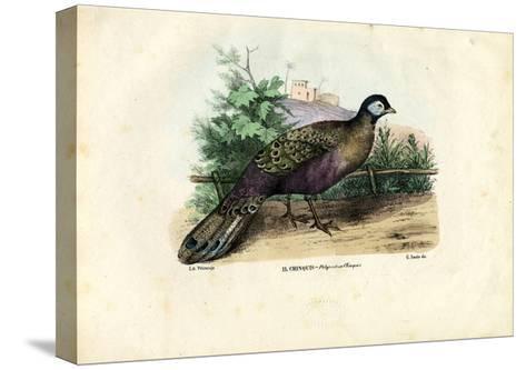 Indian Peafowl, 1863-79-Raimundo Petraroja-Stretched Canvas Print