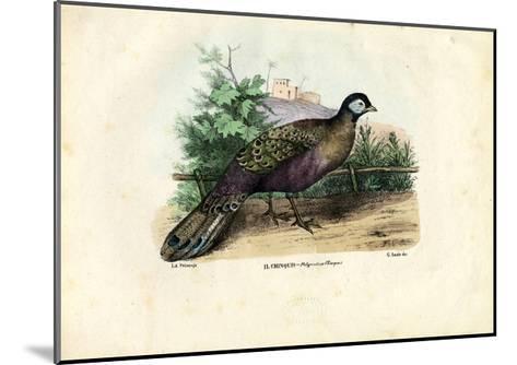 Indian Peafowl, 1863-79-Raimundo Petraroja-Mounted Giclee Print