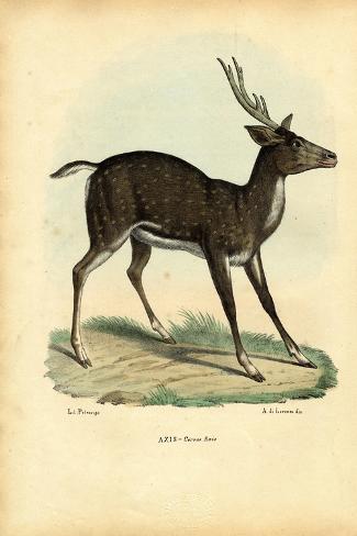Axis Deer, 1863-79-Raimundo Petraroja-Stretched Canvas Print
