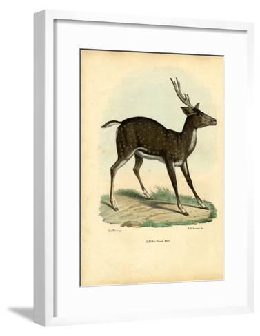 Axis Deer, 1863-79-Raimundo Petraroja-Framed Art Print