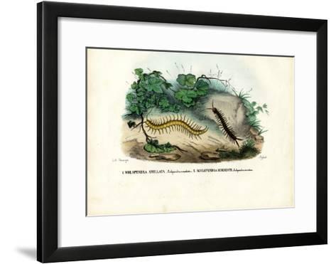 Centipede, 1863-79-Raimundo Petraroja-Framed Art Print