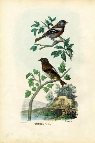 Chaffinch, 1863-79-Raimundo Petraroja-Stretched Canvas Print