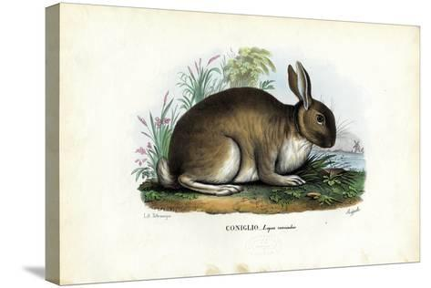 Rabbit, 1863-79-Raimundo Petraroja-Stretched Canvas Print
