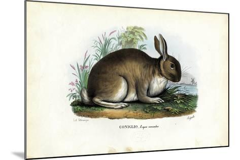 Rabbit, 1863-79-Raimundo Petraroja-Mounted Giclee Print