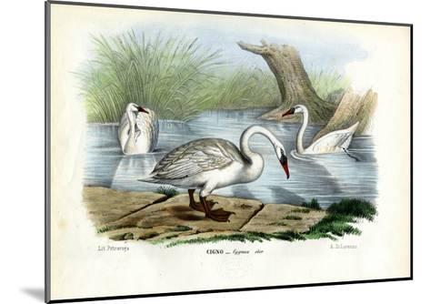 Mute Swan, 1863-79-Raimundo Petraroja-Mounted Giclee Print