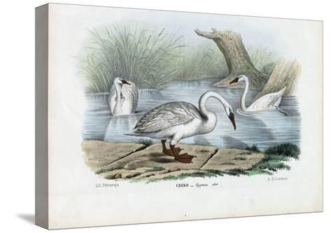 Mute Swan, 1863-79-Raimundo Petraroja-Stretched Canvas Print