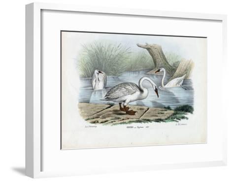 Mute Swan, 1863-79-Raimundo Petraroja-Framed Art Print