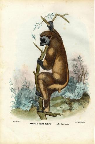 Indri, 1863-79-Raimundo Petraroja-Stretched Canvas Print