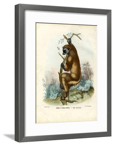 Indri, 1863-79-Raimundo Petraroja-Framed Art Print