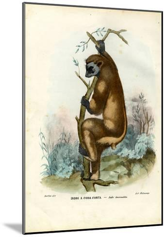 Indri, 1863-79-Raimundo Petraroja-Mounted Giclee Print