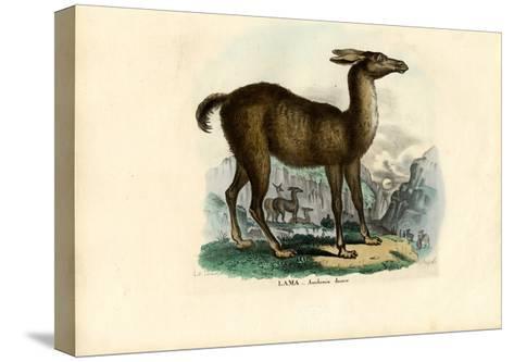 Llama, 1863-79-Raimundo Petraroja-Stretched Canvas Print