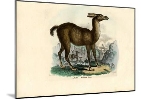 Llama, 1863-79-Raimundo Petraroja-Mounted Giclee Print