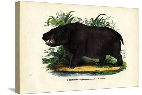 Hippo, 1863-79-Raimundo Petraroja-Stretched Canvas Print