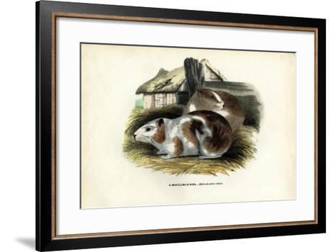 Cavy, 1863-79-Raimundo Petraroja-Framed Art Print
