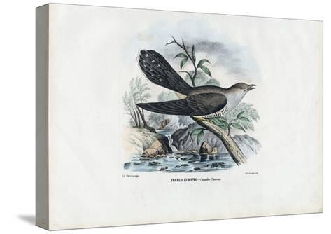 Common Cuckoo, 1863-79-Raimundo Petraroja-Stretched Canvas Print