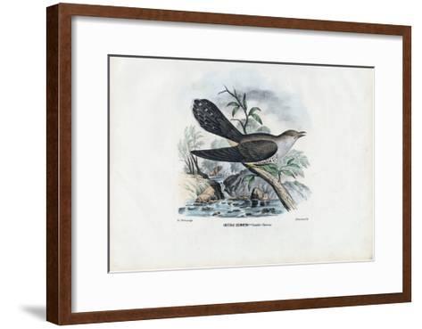 Common Cuckoo, 1863-79-Raimundo Petraroja-Framed Art Print