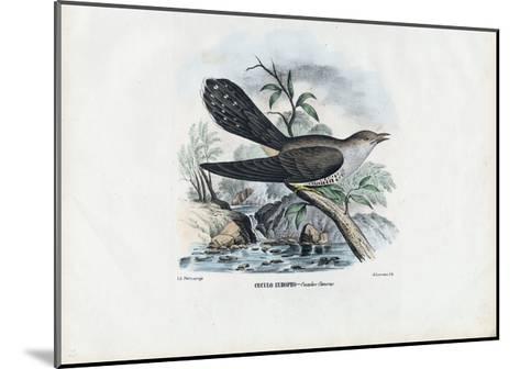 Common Cuckoo, 1863-79-Raimundo Petraroja-Mounted Giclee Print