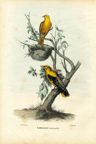 Golden Oriole, 1863-79-Raimundo Petraroja-Stretched Canvas Print