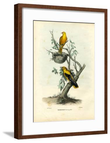 Golden Oriole, 1863-79-Raimundo Petraroja-Framed Art Print