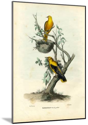 Golden Oriole, 1863-79-Raimundo Petraroja-Mounted Giclee Print
