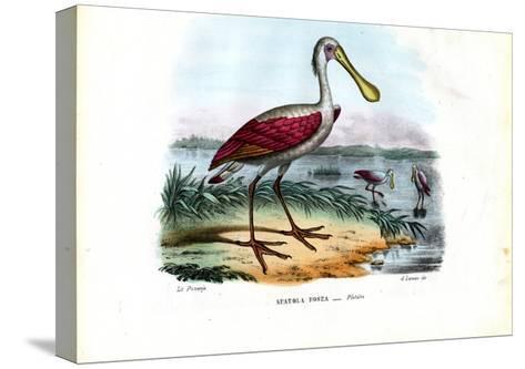 Spoonbill, 1863-79-Raimundo Petraroja-Stretched Canvas Print