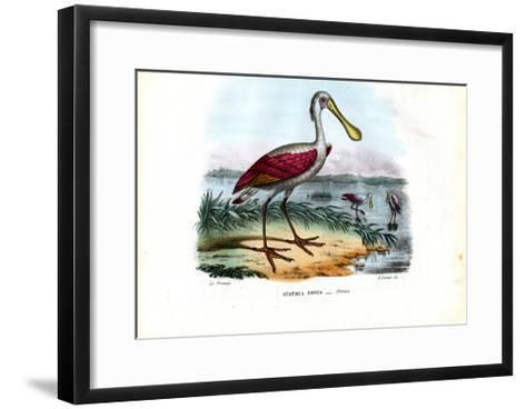 Spoonbill, 1863-79-Raimundo Petraroja-Framed Art Print