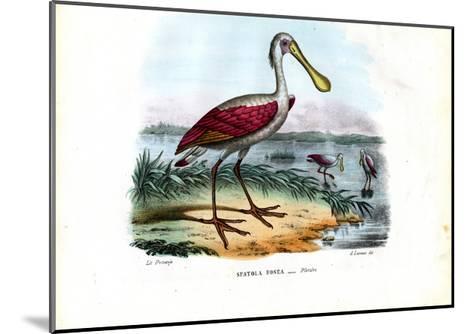 Spoonbill, 1863-79-Raimundo Petraroja-Mounted Giclee Print