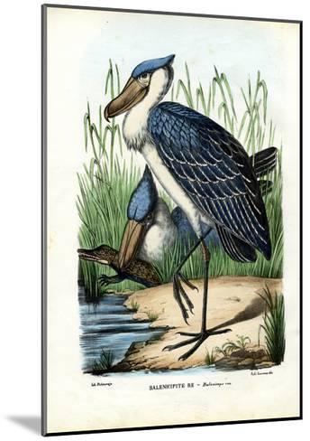 Whalehead, 1863-79-Raimundo Petraroja-Mounted Giclee Print