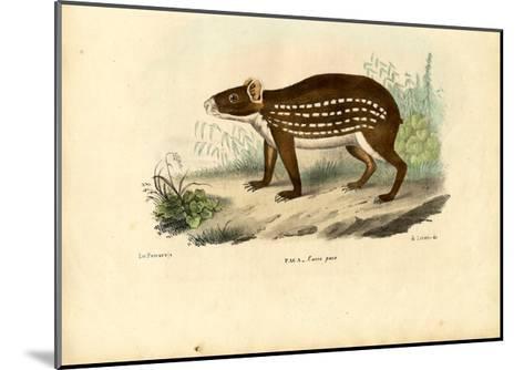 Paca, 1863-79-Raimundo Petraroja-Mounted Giclee Print
