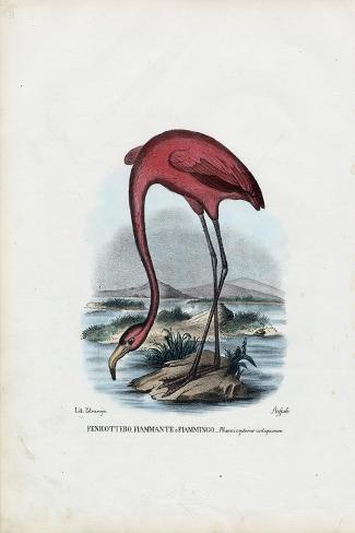 Rosy, 1863-79-Raimundo Petraroja-Stretched Canvas Print