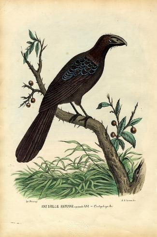Ani, 1863-79-Raimundo Petraroja-Stretched Canvas Print