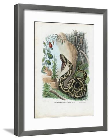 Indian Python, 1863-79-Raimundo Petraroja-Framed Art Print
