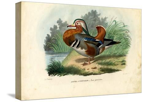 Mandarin Duck, 1863-79-Raimundo Petraroja-Stretched Canvas Print