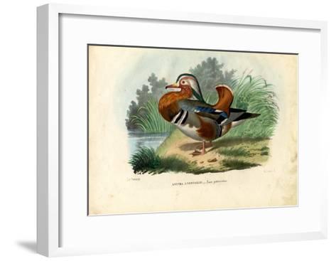 Mandarin Duck, 1863-79-Raimundo Petraroja-Framed Art Print