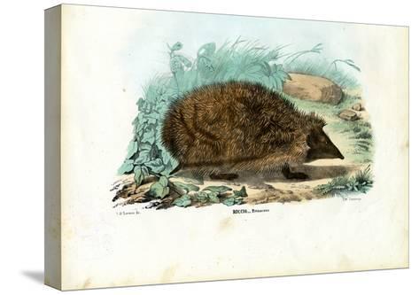 Hedgehog, 1863-79-Raimundo Petraroja-Stretched Canvas Print