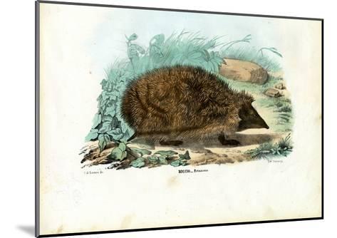 Hedgehog, 1863-79-Raimundo Petraroja-Mounted Giclee Print