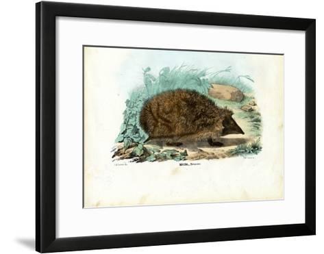 Hedgehog, 1863-79-Raimundo Petraroja-Framed Art Print