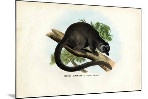 White-Headed Brown Lemur, 1863-79-Raimundo Petraroja-Mounted Giclee Print