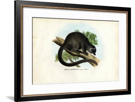 White-Headed Brown Lemur, 1863-79-Raimundo Petraroja-Framed Art Print