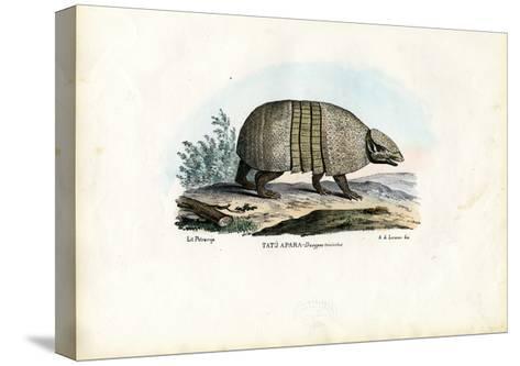Southern Three-Banded Armadillo, 1863-79-Raimundo Petraroja-Stretched Canvas Print