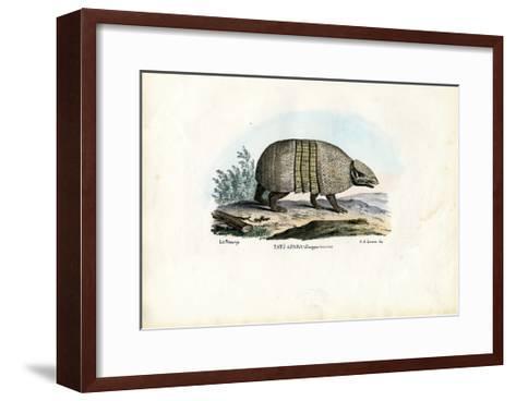 Southern Three-Banded Armadillo, 1863-79-Raimundo Petraroja-Framed Art Print